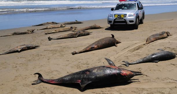 Over 3000 Dolphins Found Dead on the Coast of Peru