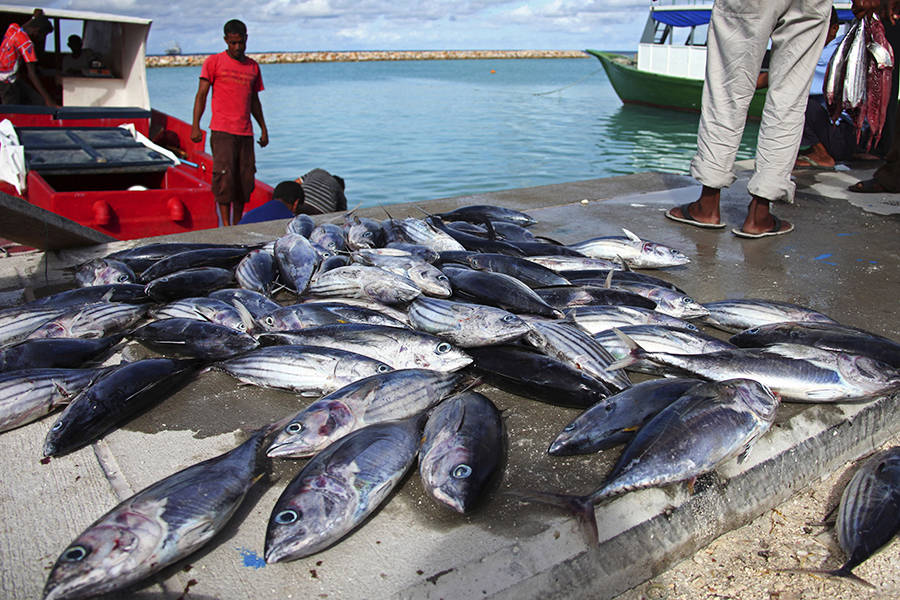 Global Warming Is Hitting Ocean Species Hardest, Including Fish Relied on for Food