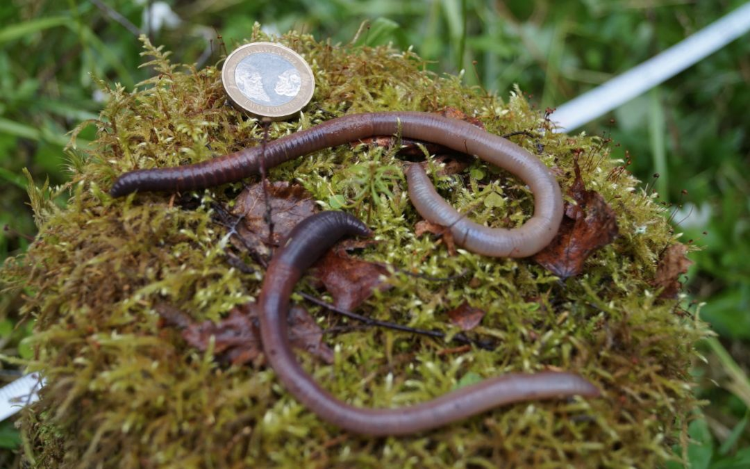'Earthworm Dilemma' Has Climate Scientists Racing to Keep Up