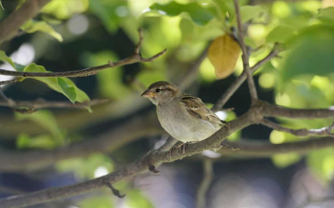 'Catastrophe' as France's bird population collapses due to pesticides