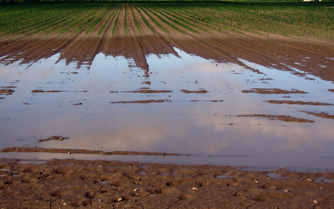 Total Catastrophe For U.S. Corn Production: Only 30% Of U.S. Corn Fields Have Been Planted – 5 Year Average Is 66%