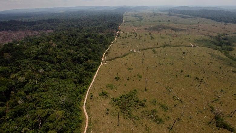 Amazon deforestation up 20% in past year, environmental watchdog says