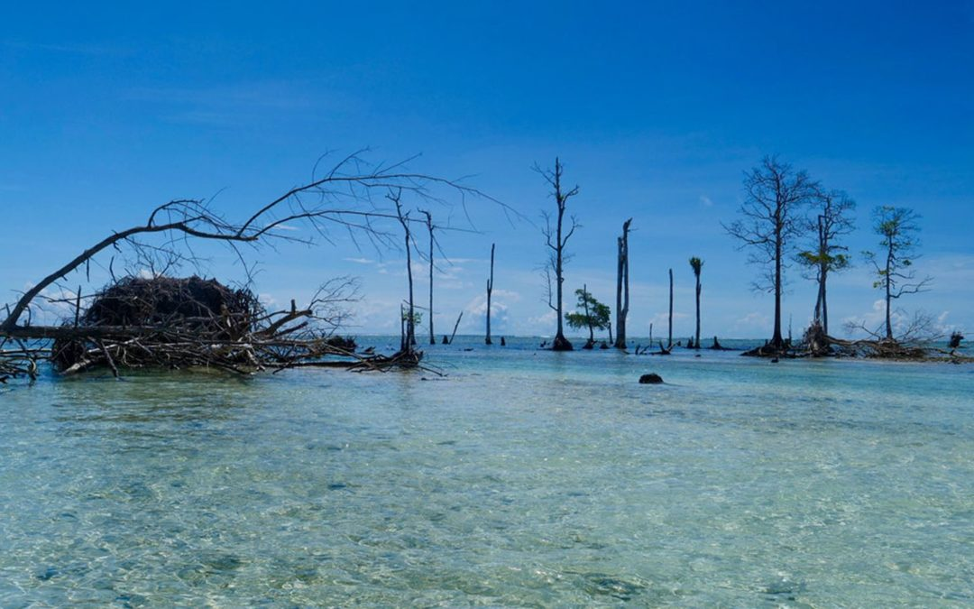 Solomon Islands disappearing beneath rising sea at 'unprecedented' rate