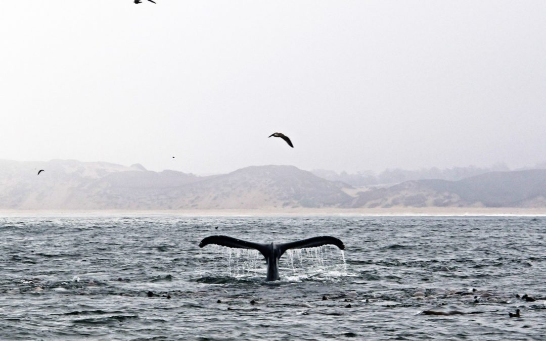 Monterey Bay is a Natural Wonder Poisoned with Microplastic