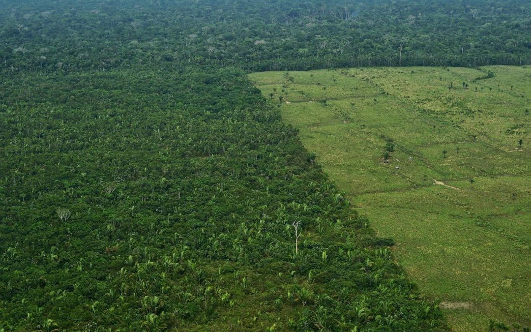 Amazon destruction accelerates 60% to one and a half soccer fields every minute