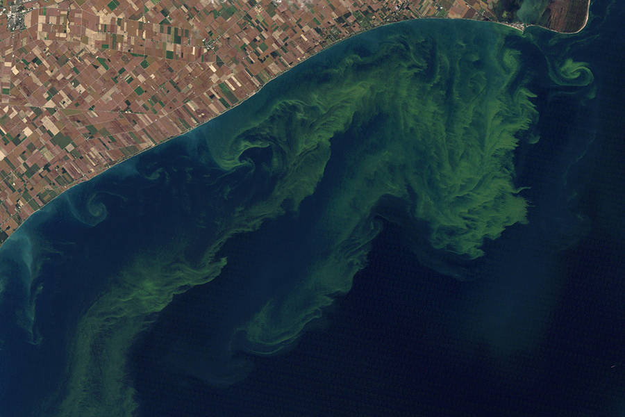 Algae Blooms Fed by Farm Flooding Add to Midwest's Climate Woes