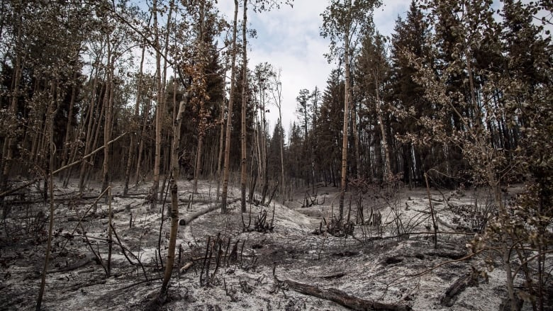 Charred forests not growing back as expected in Pacific Northwest