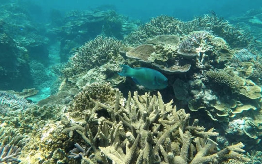 "Great Barrier Reef health outlook downgraded to ""very poor"" due to ocean warming"