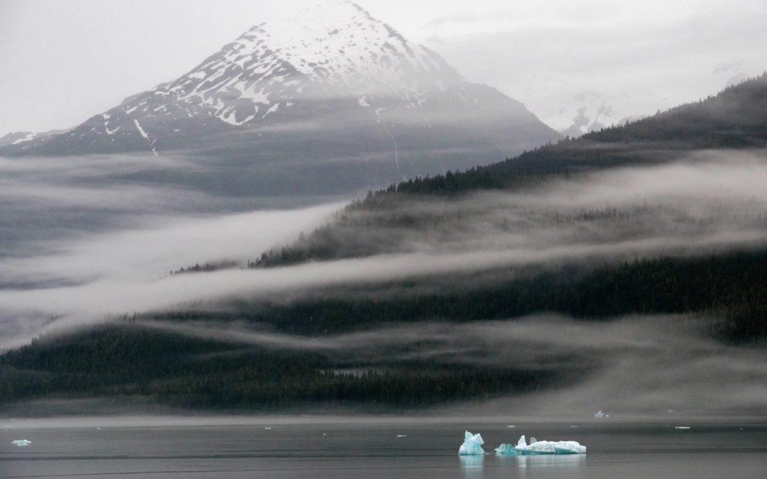 Trump Moves to Open 16.7 Million-Acre Alaskan Rainforest to Exploitation