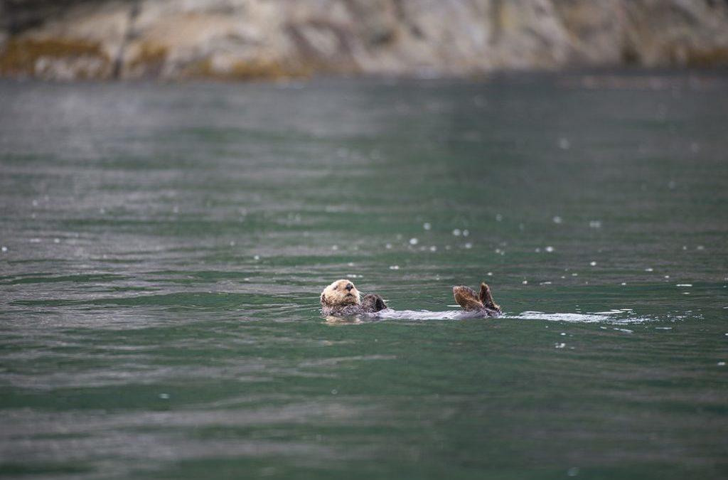 A Vast Liquidation of Public Lands Is Underway in Alaska