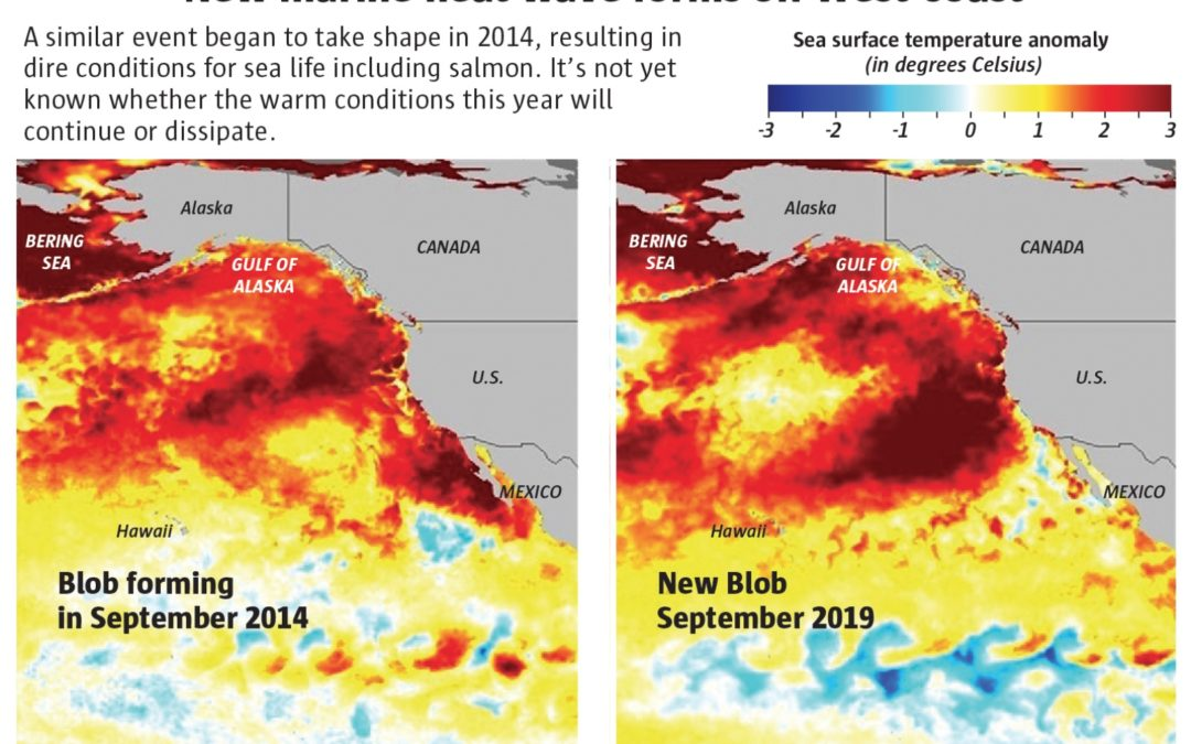 New marine heat wave resembles killer 'Blob' that devastated sea life on West Coast, NOAA says