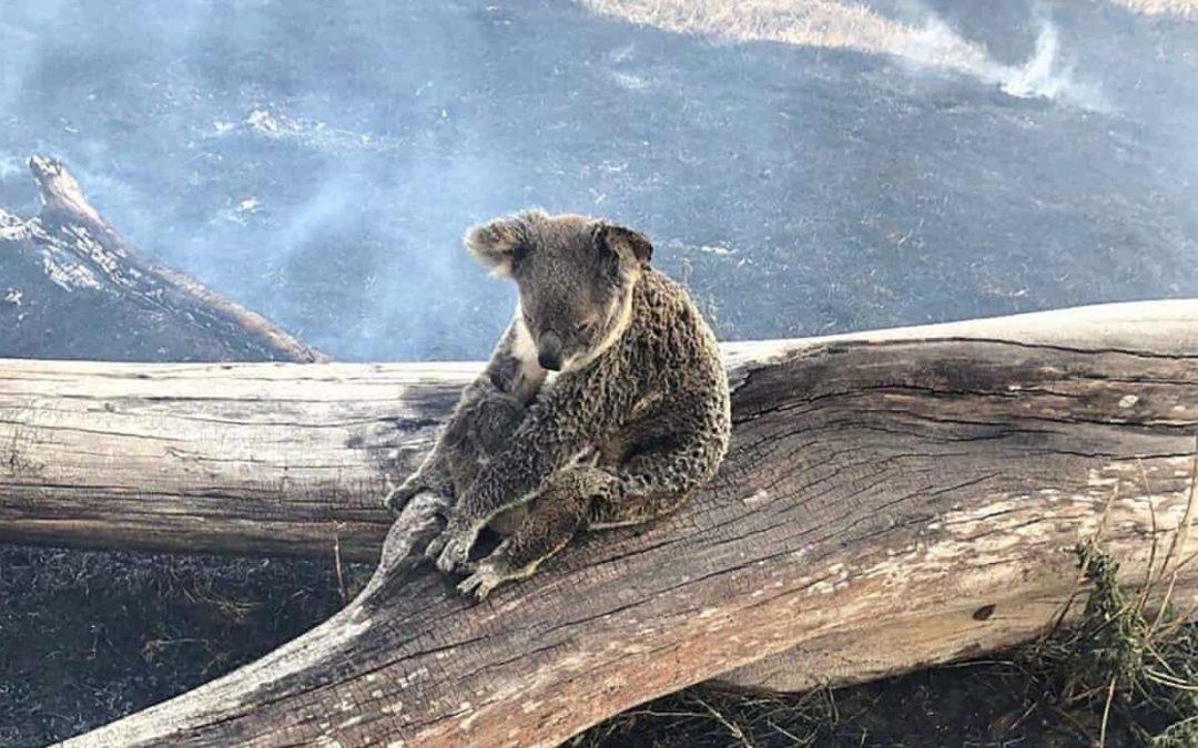 'Like nothing we've seen': Queensland bushfires tear through rainforest
