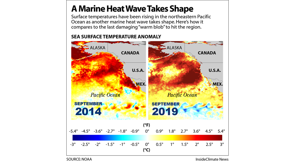 A Marine Heat Wave Intensifies, with Risks for Wildlife, Hurricanes and California Wildfires