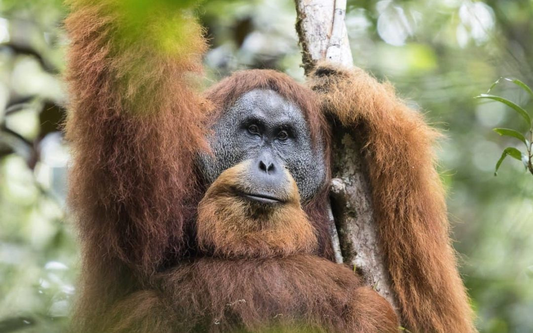 Seven new species appear for first time on list of world's 25 most endangered primates