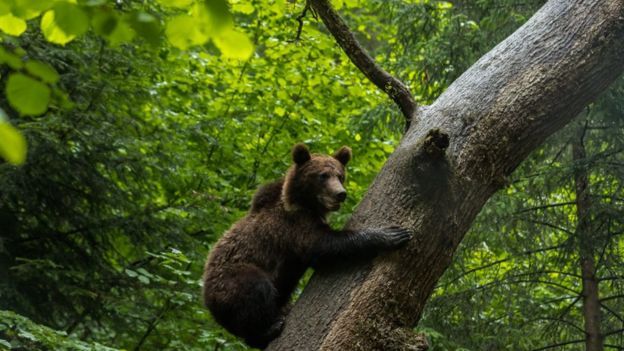 Romania forest murder as battle over logging turns violent