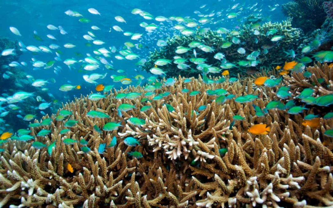 Ocean acidification can cause mass extinctions, fossils reveal