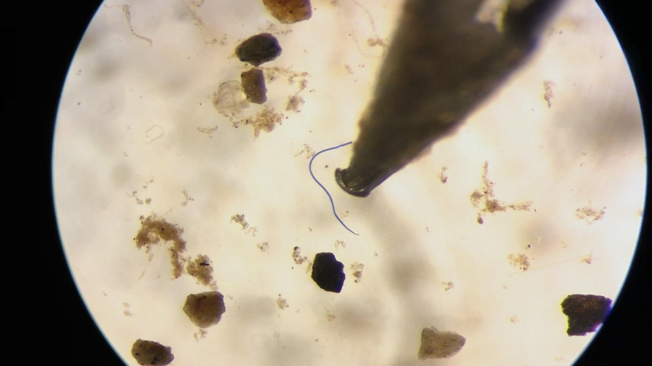 Scientists Discover Microplastics In Oregon Oysters And Razor Clams