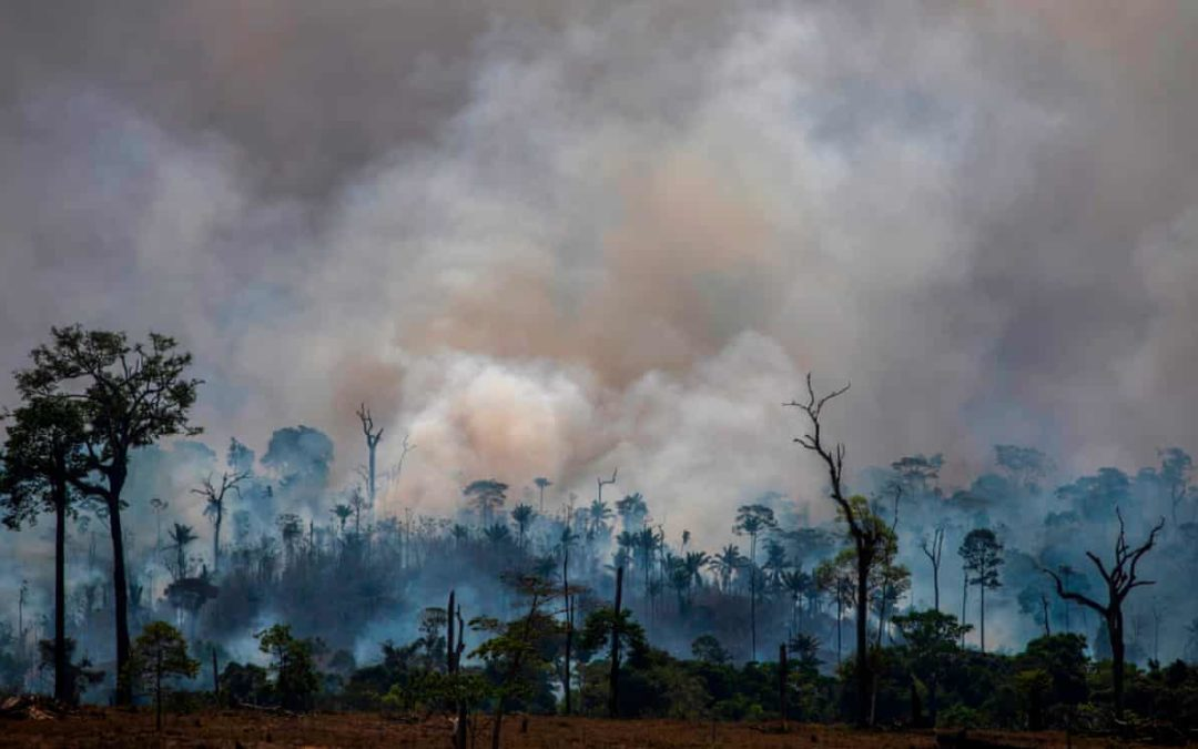 Amazon deforestation 'at highest level in a decade'