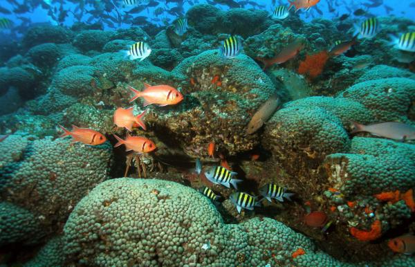Gulf Coast Coral Likely To Face Widespread Destruction By The End Of The Century