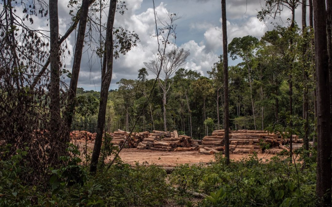 The Amazon Is Completely Lawless: The Rainforest After Bolsonaro's First Year