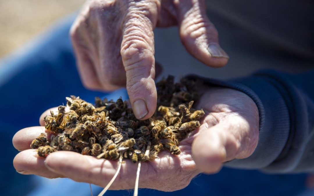'This is total devastation' — Magic Valley bees dying in droves