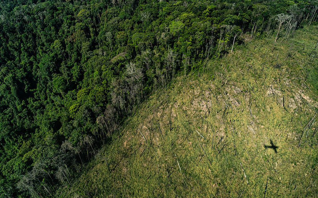 Regrowth of Logged Amazon Forests is Much Slower than Previously Thought