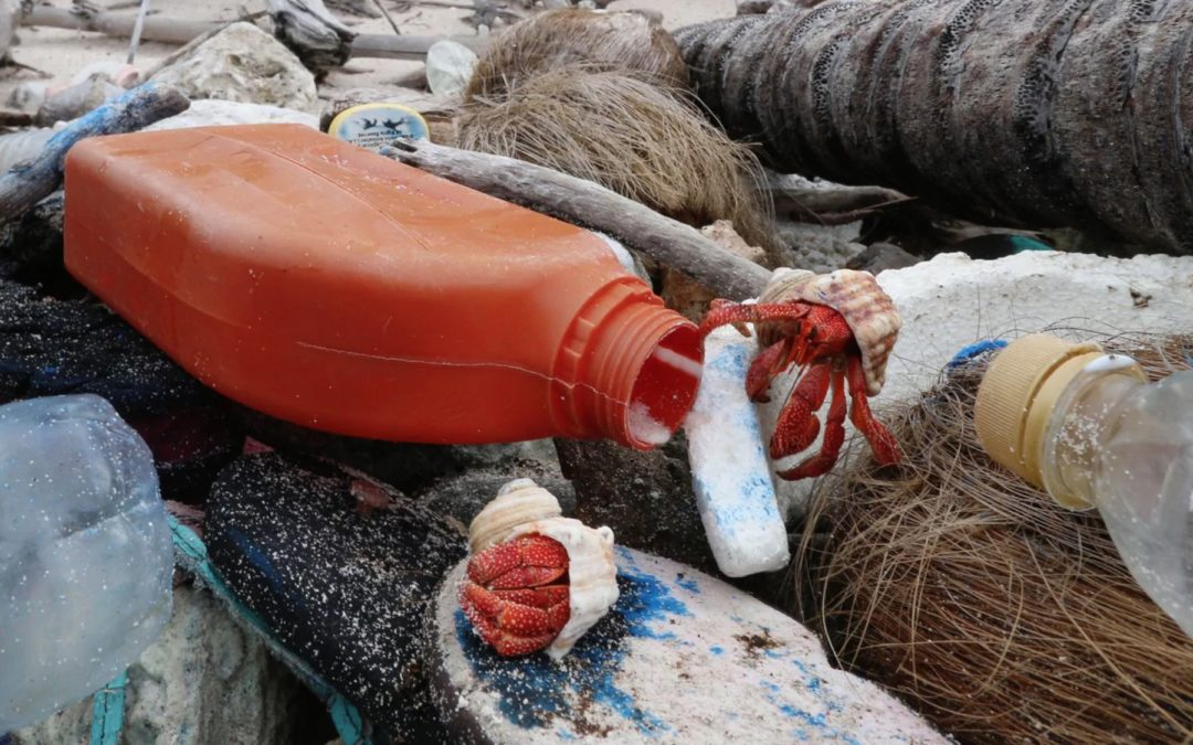 What happens when hermit crabs confuse plastic trash for shells? An 'avalanche' of death.
