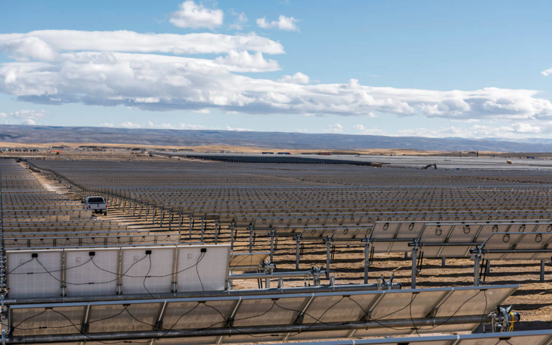 Antelope hindered by solar farm