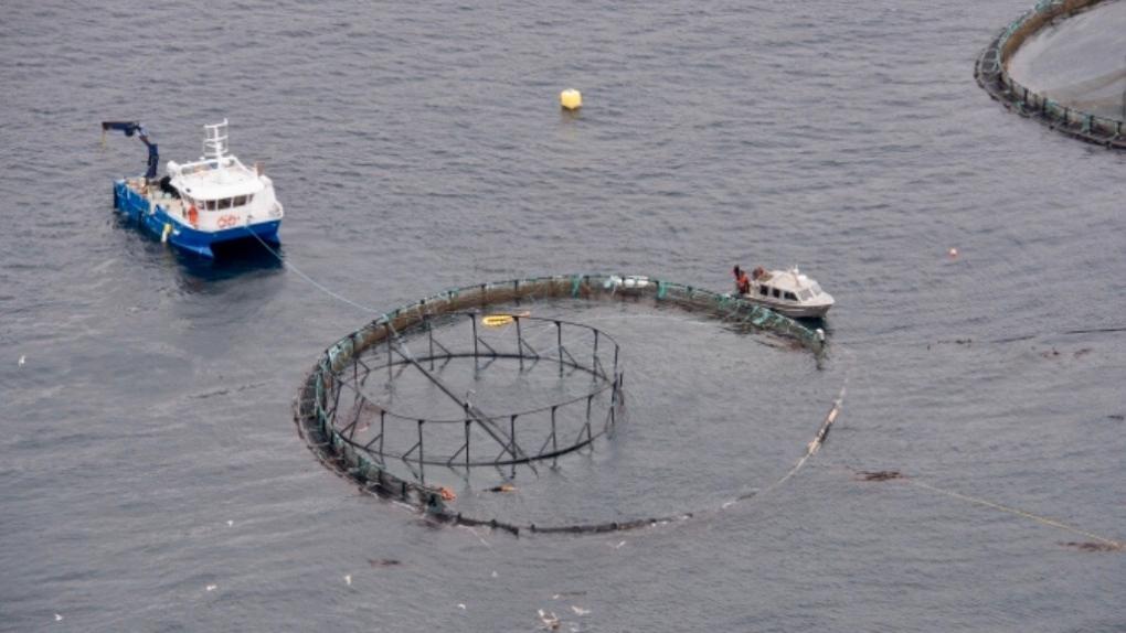 Nearly 20,000 non-native salmon escaped after fire at B.C. fish farm