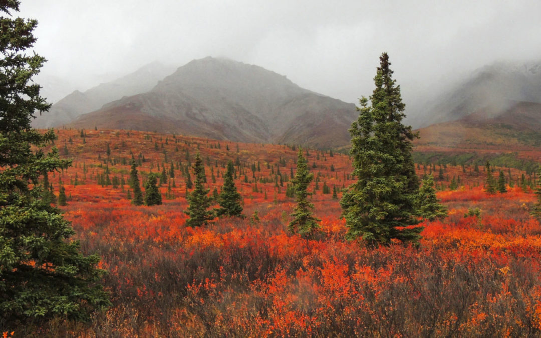 Native Species or Invasive? The Distinction Blurs as the World Warms