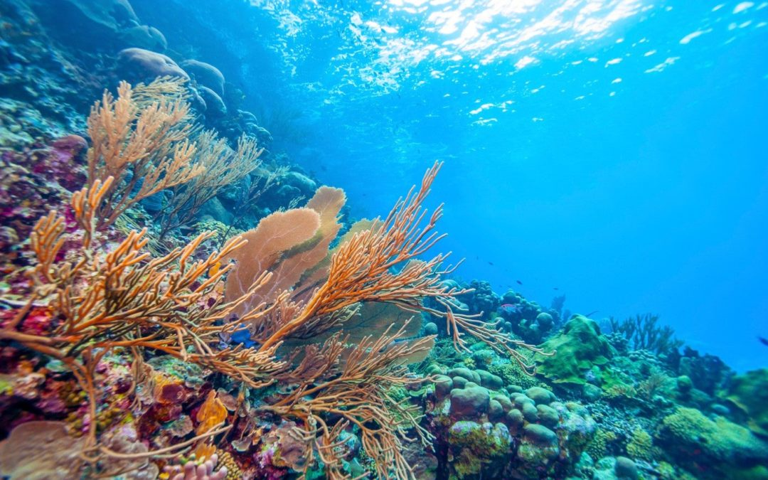 New study says Earth's most biodiverse ecosystems facing collapse