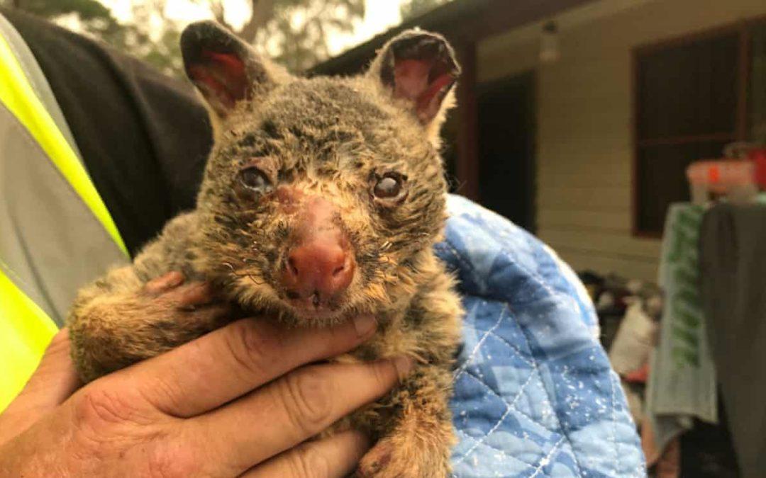 'Silent death': Australia's bushfires push countless species to extinction
