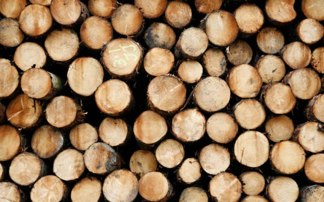 Timber at a sawmill