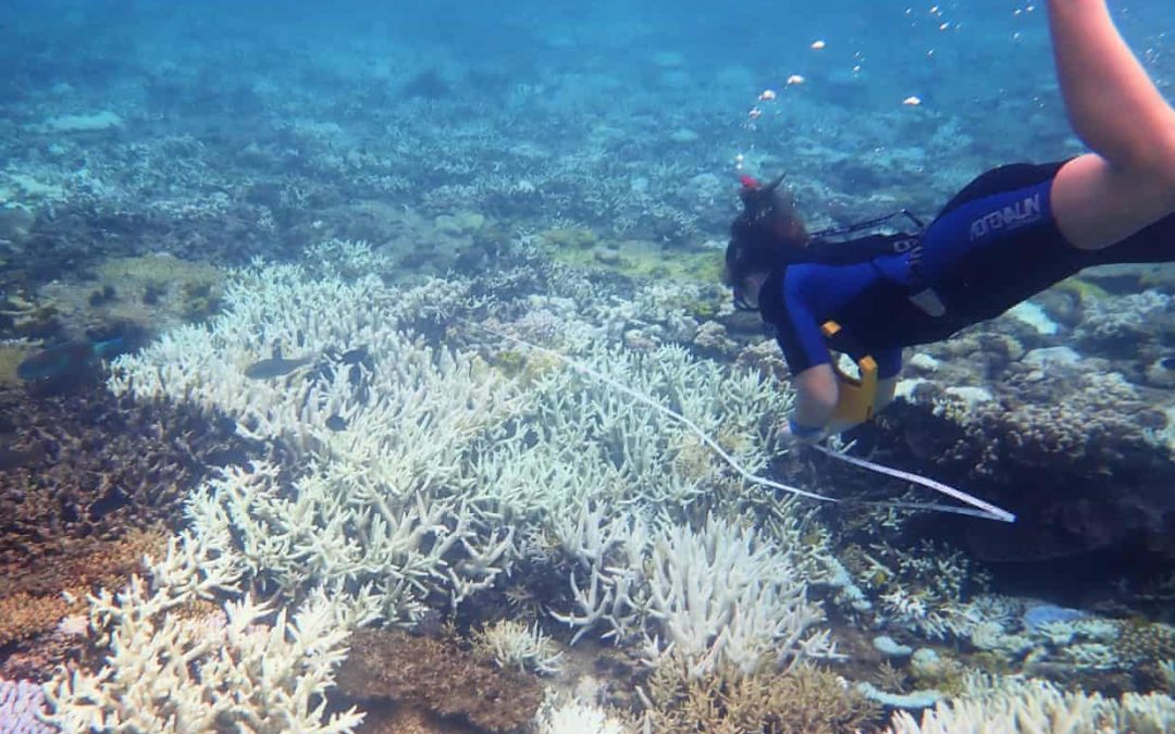 Great Barrier Reef suffers third mass coral bleaching event in five years