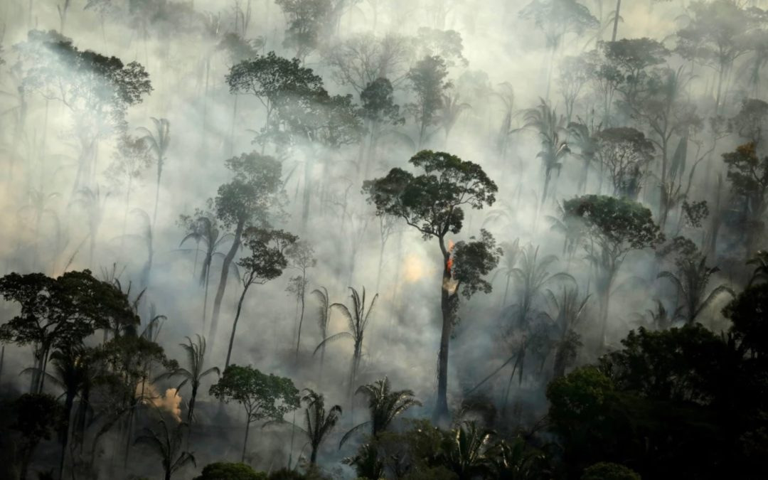 With world distracted, the Amazon rainforest continues to burn