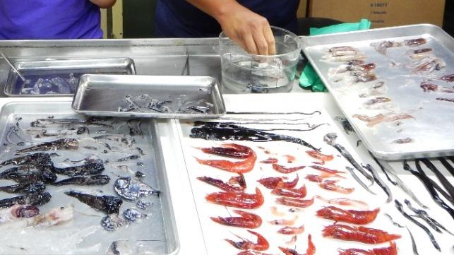 Mesopelagic fish, including lanternfish and hatchetfish species