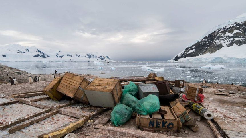 Antarctic biodiversity increasingly under threat as human activity spreads across continent
