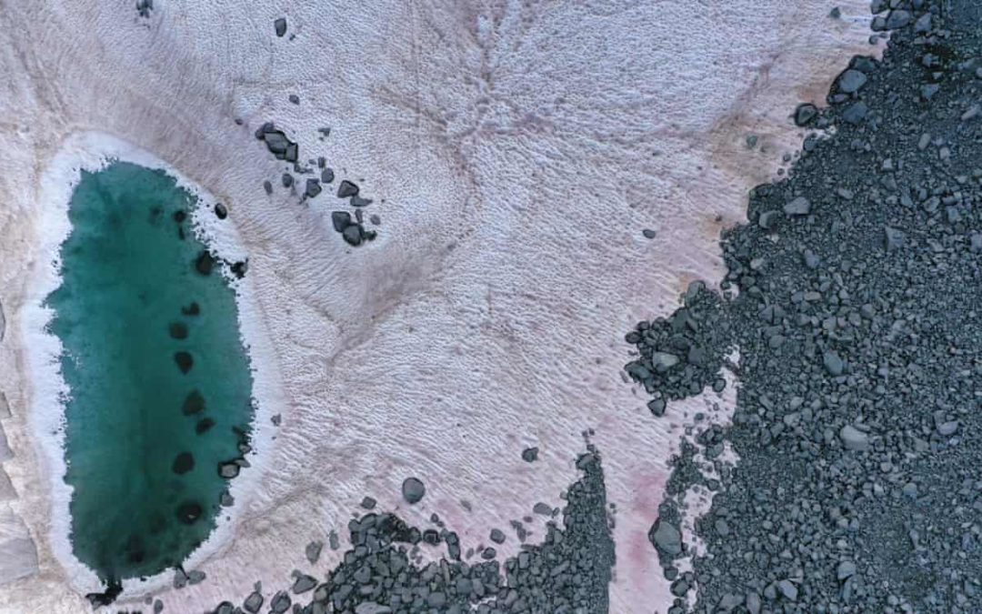 Algae turn Italian Alps pink, prompting concerns over melting