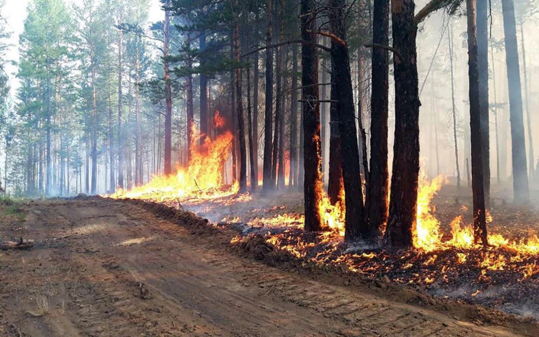Siberian Wildfires Cover Area Larger Than Greece – Greenpeace