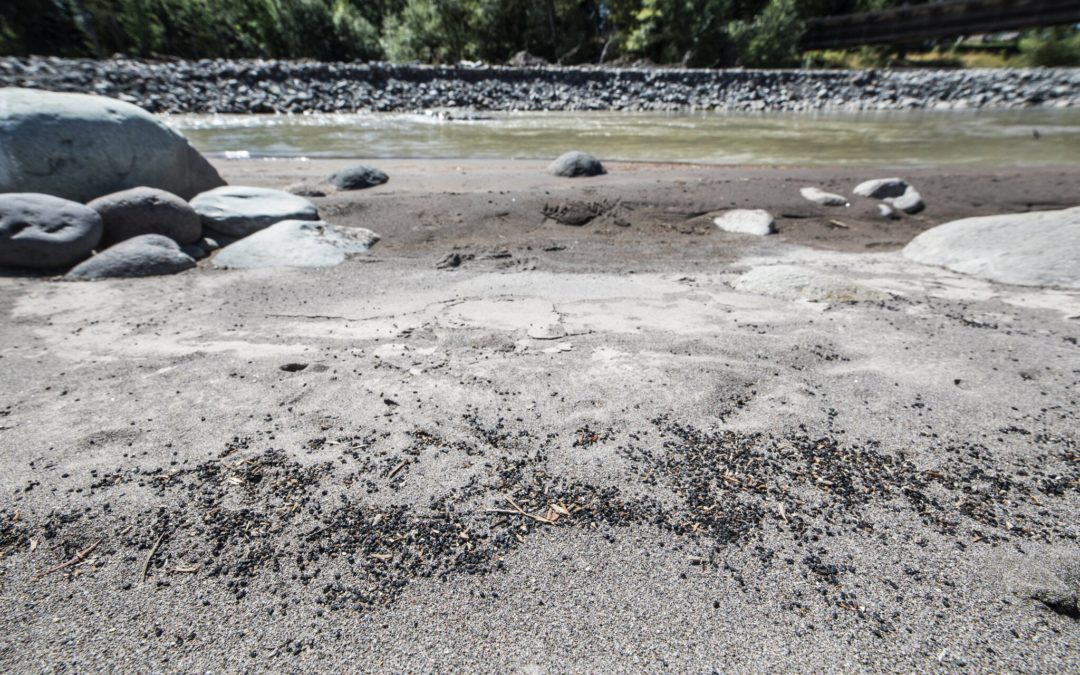 Rubber debris litters miles of Puyallup River after artificial turf was used in dam project without permit