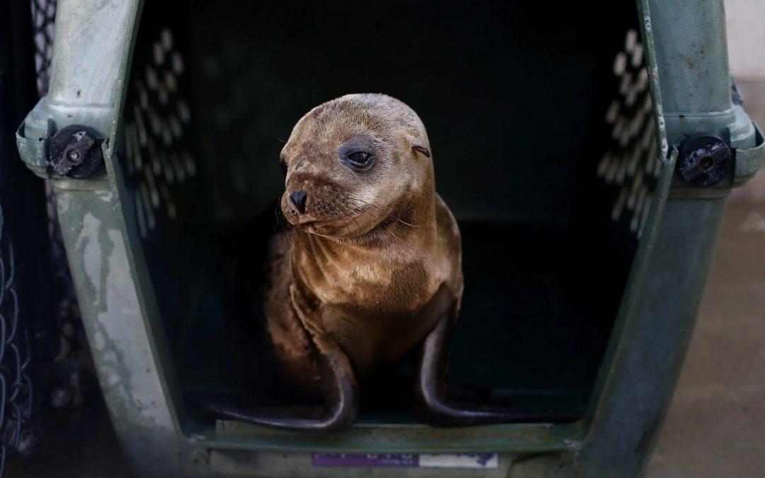 Sick Sea Lion Pup