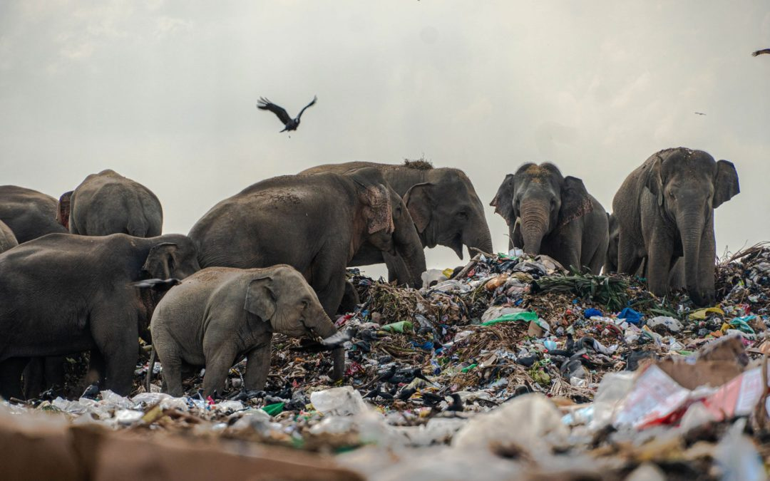 Elephants In Trash