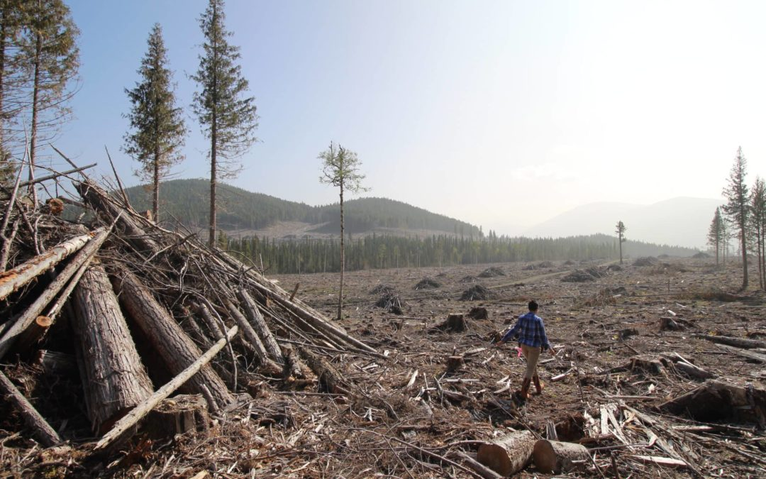 B.C. gives Pacific BioEnergy green light to log rare inland rainforest for wood pellets