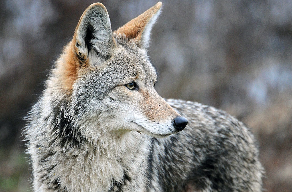 Federal Government Admits Killing over 1.2 Million Native Animals in 2019