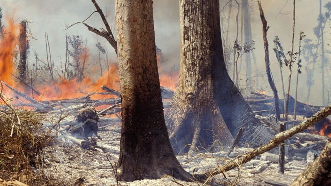 Two-fifths of plants at risk of extinction