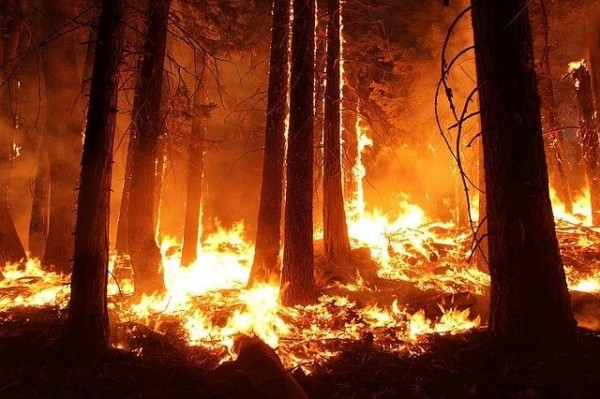 Wildlife species continue to be threatened, some with extinction, by the continuing wildfires occurring in the western US.