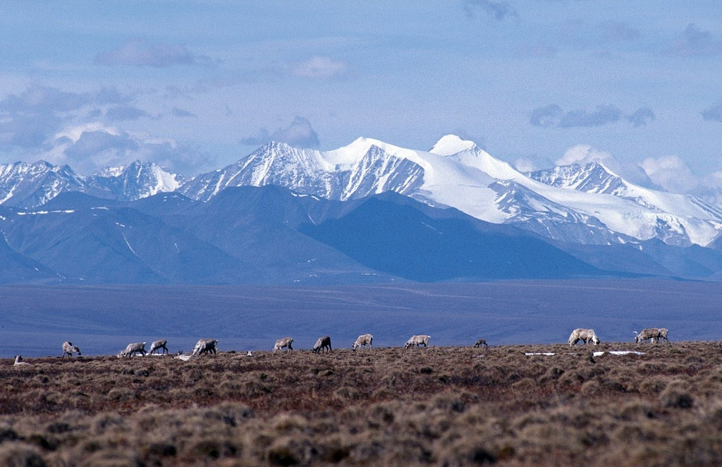 Trump officials rush to auction drilling rights to Arctic National Wildlife Refuge