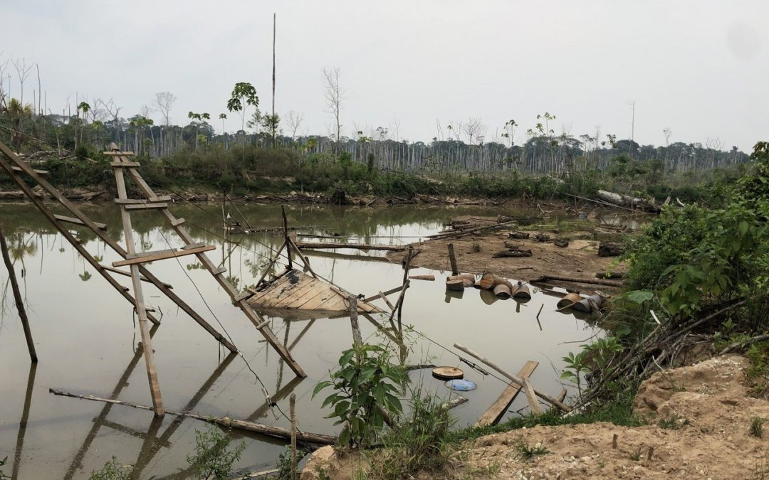 Peru Gold Mining Is Increasing Wildlife Exposure to Mercury