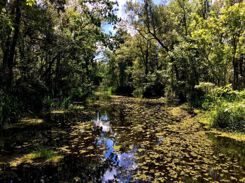 Mobile River Delta