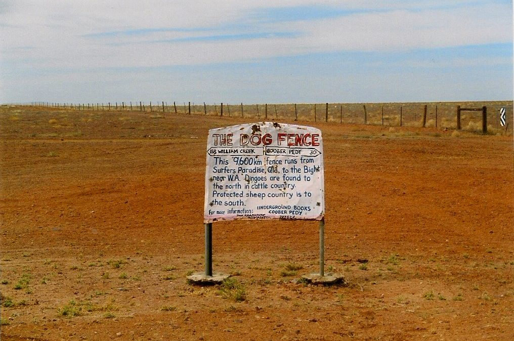 Australia's dingo fences, built to protect livestock from wild dogs, stretch for thousands of kilometers.
